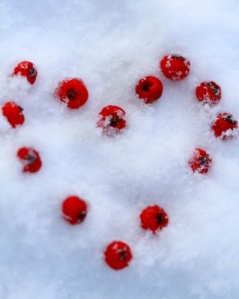 """Berry Snow Heart"" by Tina Phillips"